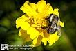Bee 41.jpg