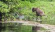 Grizzley Bear 1-1522.jpg
