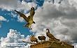 Osprey-3-pennsylvania.jpg