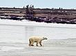 Polar-Bear--206-9-WEB.jpg
