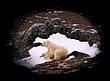 Polar-Bear--246-9.25x12-WEB.jpg