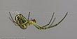 Spider3-2.jpg
