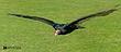 Vulture-31.jpg