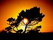 nuclear tree.jpg