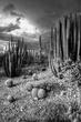 Desert Storm Mono.jpg