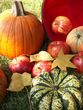 Autumn harvest2.jpg