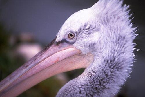 Birds20004.jpg