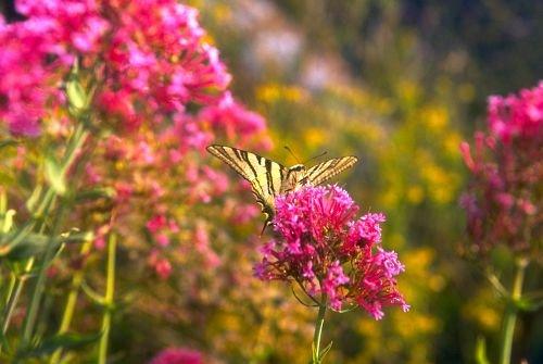 Butterfly20001.jpg