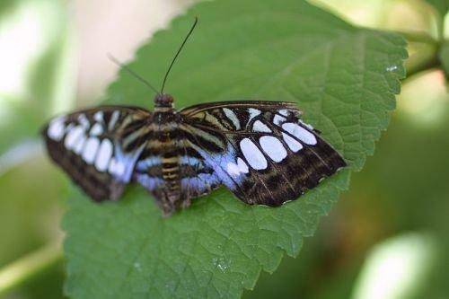 Butterfly20002.jpg
