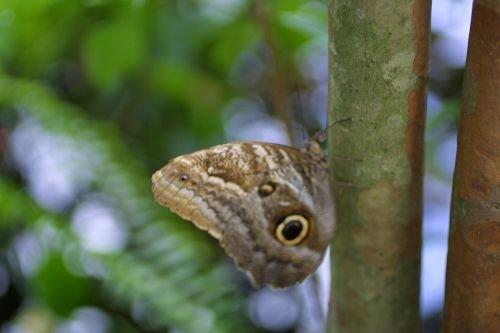 Butterfly20003.jpg