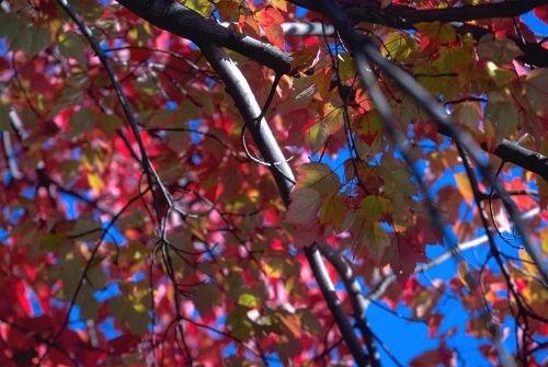Fall_Colors0001.jpg