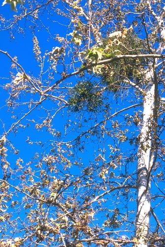 Fall_Colors0002.jpg