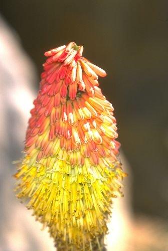 Fall_Colors0003.jpg