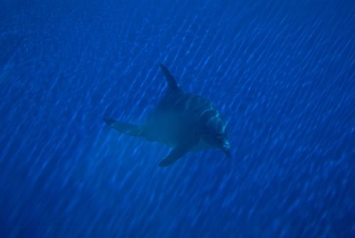 SeaLife20002.jpg