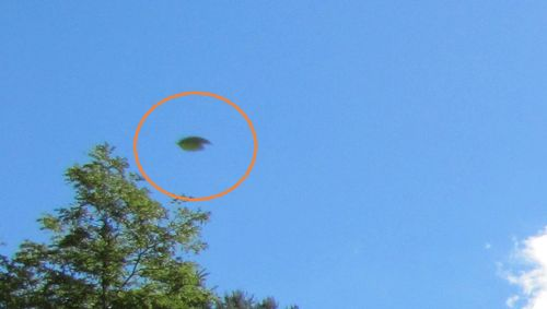 9-5-10 JIM THORPE PENNSYLVANIA--MUFON.jpg