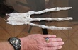 STRANGE--CUSCO PERU 2017 ALIEN HAND DISCOVEREDX-RAY SHOWS BONES IN HAND.jpg