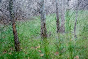 multiple exposure of winter trees