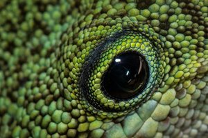 close up of lizard's eye detail