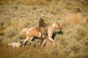 Cowboy on horse with ranch dog at his side