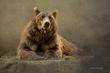 Bear-JWW.jpg