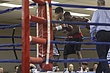 boxing-100.jpg