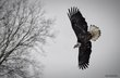 eagle04.jpg