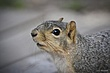 squirrel021.jpg