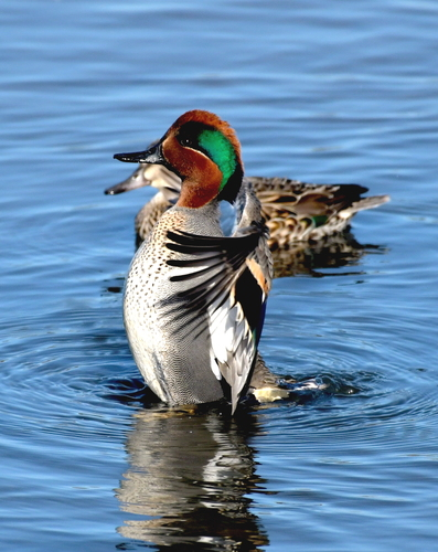 Duckw(1).jpg