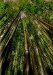 Bamboo_tonemapped.jpg