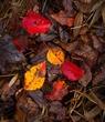 Fall Leaves 2w copy.jpg