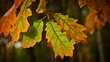 Fall Leaves Greenw.jpg