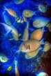 Fish HDR.jpg
