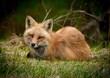 Fox Neww.jpg