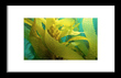 Framed Kelp.jpg