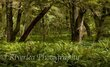 Fern and beech forest - Routeburn Track - Glenorchy.jpg