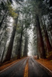 Avenue-of-the-giants-redwood-CA.jpg