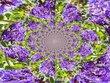 Purple Panache.jpg
