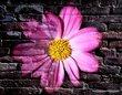WallflowerI.jpg
