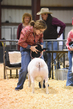 18HCD-BreedingSheep-4812.jpg
