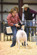 18HCD-BreedingSheep-4813.jpg