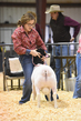 18HCD-BreedingSheep-4814.jpg