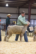 18HCD-BreedingSheep-5194.jpg