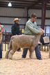 18HCD-BreedingSheep-5195.jpg