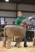 18HCD-BreedingSheep-5196.jpg