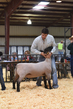 18HCD-BreedingSheep-5426.jpg