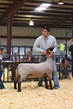 18HCD-BreedingSheep-5427.jpg
