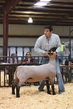 18HCD-BreedingSheep-5428.jpg