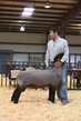 18HCD-BreedingSheep-5429.jpg