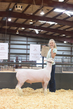 18HCD-BreedingSheep-5506.jpg