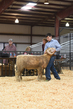 18HCD-BreedingSheep-5541.jpg